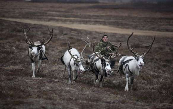 In pictures: The reindeer people under threat this Christmas - Survival International